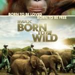 Born to be Wild Profile Picture
